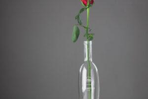 Rose_Midt_HDR-2