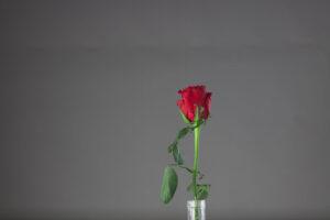 Rose_Top_HDR-2